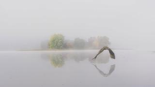 Early Autumn Foggy Morning Magic