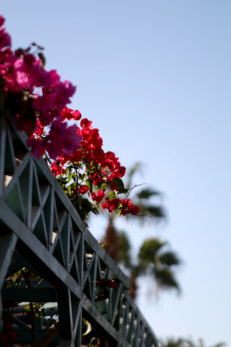 Flowers in Hurghada