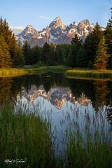 Tetons_27A0126 (Alfred J. Lockwood Photography) Tags: alfredjlockwood nature landscape sunrise schwabacherlanding grandtetonnationalpark beaverpond snakeriver tetons grasses forest rockymountains wyoming summer reflection