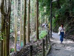 Monkey Forest Path (Vinceshoots) Tags: forest nature green sister family tree park iwatayama arashiyama japan