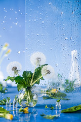 Still life with dandelions in a bottle with water drops on window glass (Dina Belenko) Tags: background beautiful dandelion glass light nature spring rain beauty fresh water wet green window drops flower freshness object sky texture summer arrangements blossoming calm vase blue clear copyspace blur action focus minimalist simplicity wind seed flying growth fragility plant sunlight blossom environment freedom season morning blowball concepts individuality fluffy