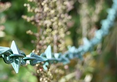 Chain link and bokeh (blueachilles) Tags: chainlinkfence fence hff fencedfriday ditookthis