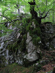 Simbioza (Damijan P.) Tags: bovec slovenija slovenia korita gorge gore hribi monutains prosenak