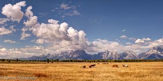 A Rancher's Paradise