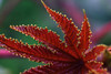 Plant (Macro) (Jocarlo) Tags: macro macros macrophotographers macrofotografía macrofotografie macrography macrophotography makro makros nationalgeographic nature natura natur naturaleza flickrclickx flickraward flickrstruereflection1 flickrphotowalk fuji fujifilm fujistas flora flor flower flores fujixt1fujifilm flowers flickr fujixt1 art afotando blinkagain crazygeniuses adilmehmood gente photowalk jocarlo clickofart photowalkmelilla magicalskiesmick luz light melilla ngc pwmelilla parques parque bosque soulocreativity1 xt1 xt1fuji crazygenius