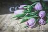 Forgotten Tulips (Janet_Broughton) Tags: tulips textures flowers floral stilllife vintagemusic