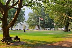 Big Trees at Lake Side Park (Battle Royale1) Tags: nelson bc britishcolumbia kootenay summer town canada big trees lake side park
