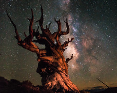 Ancient Bristleconepine and the Milkway (corey_layman) Tags: nature stars milkway ancient bristleconepine explore colors tree old california dslr canon landscape beautiful camping hiking backpacking outdoors space