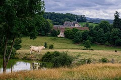 Le Charolais et Le Château (Eric@focus) Tags: cow castle burgundy bourgogne bucolic rural idyllic countryside campagne walking holiday