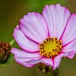 so nice flower thumbnail