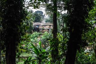 CASE AI BORDI DELLA FORESTA.    ----     HOUSES ON THE EDGE OF THE FOREST