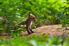 _J6A0621 (Franck Sebert) Tags: renard roux red fox goupil proximité forêt 5d mark iii 400mm 28 l is usm nature sauvage mammifère extérieur animal renardeaux 2017 mai ef 14x wildlife wild