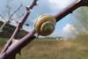 sporty snail... :-) (Stefan Giese) Tags: panasonic fz200 wickede schnecke snail gelb schneckenhaus gelbschwarz schwarz dornen makro macro closeup