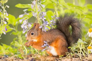 squirrel is standing in between flowers