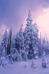 Olympic Ethereal II (jordans-photos) Tags: olympicmountains olympicnationalpark snow winter winterlandscape colorful pastel pastelcolors pacificnorthwest light verticallandscapes forest