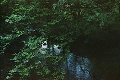 River 9 (avenwildsmith) Tags: film 35mm nature devon countryside analog analogue kodak retinette 1b grain england britain wild wilderness river tavy water tree trees leaves green 35mmfilm kodakretinette1b