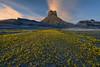Yellow Brick Road (Willie Huang Photo) Tags: utah arizona badlands southwest superbloom wildflowers flowers landscape desert nature butte spring scenic