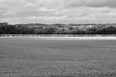 Strip of Sunshine (James Mans) Tags: nikon d5500 281750 enlgand green pleasant land countryside hurley bw blackandwhite landscape field