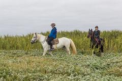 La Torche - Sortie avec le centre équestre de la Torche (julienbraco) Tags: horse frenchbrittany latorche cheval balade fields equestre roseaux roseraie tronoan tronoën