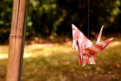 Crane... (Maria Godfrida) Tags: 7dwf crane bird origami red garden decoration paper fauna intruder crazytuesdaytheme