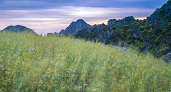 Wild grass (=Heo Ngốc=) Tags: outdoor pattern pure nobody nature light natural weather wild spring summer landscape country color countryside background grass field flower moutains evening clouds sunset longexposure blur motion vietnam