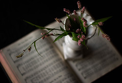 Hymnal (Captured Heart) Tags: seeds pretty hymnal hymns whitevase