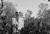 Terrore (Mancio85) Tags: monocromo black white bianco nero park garden giardino tarocchi tales sagoma terrore terror scary capalbio italia italy toscana tuscany canon 80d