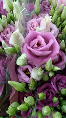 Con Barcelona.. (aliciap.clausell) Tags: flores rosas flowers fiore fleurs