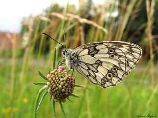 Butterfly 1415