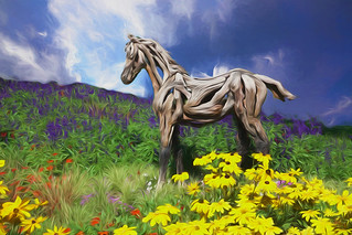 Driftwood Foal