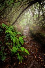 El camino... (JACRIS08) Tags: