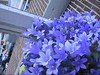 CLIP9234-043 (Rumskedi) Tags: monde世界 europa europe欧洲 belgië belgique belgien balcon campanule fauxbourdon