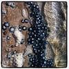 IMG_2766 (Rossyplaya) Tags: paraguaná bordes vidaanimal medusas aguamala