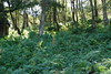 2017-08-28 cannock chase 059 (sonya.britton) Tags: cannockchase staffordshire ancientforest wood forest walk family tree