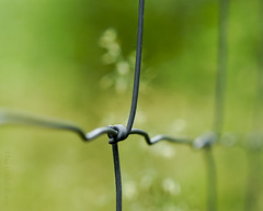 Bokeh with a twist! (Elisafox22) Tags: elisafox22 sony ilca77m2 100mmf28 macro macrolens telemacro fence wire twist chainlink metal fencedfriday hff fencefriday bokeh dof depthoffiled focus leithhall aberdeenshire scotland outdoors elisaliddell©2017