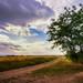 Le petit chemin forezien