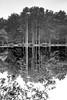 Beyond the real (Vanvan_fr) Tags: nb bw noiretblanc blackandwhite trees arbres forest foret phantasmagoricaltrees mirror reflet reflection perception nature lake lac upsidedown unrealatmosphere eau water zeiss carlzeiss distagon distagon352zf distagon352zf2 35mm nikon df nikondf fullframe france photo