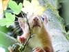 P1020210 (jeanchristophelenglet) Tags: écureuil squirrel esquilo animal étangducorraforêtdesaintgermainenlayefrance