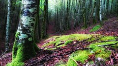 En el bosque (jumaro41) Tags: bosque árbol eugi navarra green verde hojas luz monte mountain montaña nnaturaleza nature natural paisaje sendero senderismo troncos tree vida