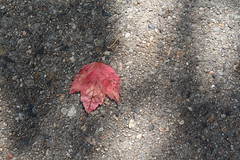 IMG_6768 (MeiaGeddes) Tags: cambridgema cambridge massachusetts nature walking photography boston bostonma outdoors