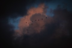 I watch the birds fly south across the autumn sky (Livesurfcams) Tags: geese flying instow devon fuji fujifilm xt1 55200