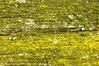Picknick-Tischfläche; Meggerdorf (1) (Chironius) Tags: meggerdorf stapelholm schleswigholstein deutschland germany allemagne alemania germania германия niemcy holz wood legno madera bois hout grün flechte lichen