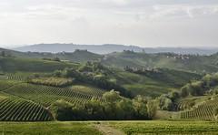 Wijngaarden van Barolo, Piemonte (Maarten Kroon @ shooting) Tags: barolo piemont piemonte wines vineyards wijngaard