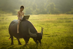Boy riding buffalo (santifoto9) Tags: buffalo boy asian notebook laptop people happy outdoor thailand thai kid school nature person business lifestyle computer internet asia countryside learning farmer online child social laos face man fun playing technology happiness grass looking communication field little childhood outside agriculture myanmar vietnam malaysia cambodia indonesia rural local rustic poor aec