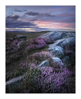 Curbar Heather