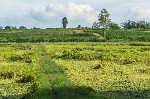kamphaeng phet - thailande 54