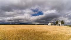 avant-après 2 (Tasmanian58) Tags: field wheet sky clouds orleansisland house ancestral landscape storm colors loxia batis zeiss sony a7ii mountains