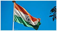 15 AUGUST, Happy Independence Day! (Ramalakshmi Rajan) Tags: indianflag nationalflag tricolor nikond5000 nikon nikkor18140mm independenceday wishes india lifeinindia