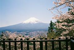 FInd20-Fuji (hhnguyen88) Tags: konicahexaraf analog 35mmfilm filmphotography fujicolorindustrial100