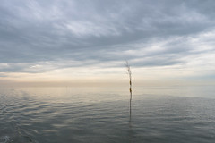 De stilte van het Wad (Jan R. Ubels) Tags: tranquility olympus em1 wad waddenzee nederland netherlands zee sea rust serenity